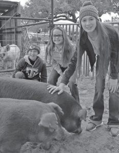Pictured with their Duroc pigs from left are Chase Rankin (7th Grader at JHS), Sadie Schimelpfening (5th Grader at PES) and Brook Rankin (8th Grader at PJH). Look for a story in next week's Farm & Ranch Section regarding the Rankins' and Schimelpfenings' Atascosa County Livestock Show family tradition. CONTRIBUTED