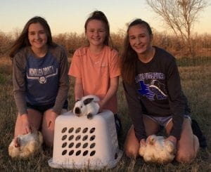 """Pictured, left to right, Madison Sherrer, Masyn Sherrer, Makenzie Sherrer. Daughters of Marty and Casey Soward of Cross. Members of the Tilden FFA Chapter. """"Exercising"""" their broilers and bunnies in preparation for the McMullen County Livestock Show hosted by the Tilden Livestock Scholarship Association. Auction begins at 2 p.m. Sat. CONTRIBUTED PHOTO"""