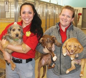 Healthy, friendly dogs ready for adoption at the Atascosa County Animal Shelter located at 292 Spur 162, northwest of Jourdanton are being held, from left, by Technician Sheyanne Luckman and Technician Sabrina Steenbeke. LEON ZABAVA | PLEASANTON EXPRESS