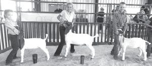 Junior Goat Showmanship winners were Cheyann Pullin, 1st place; Darcy Golla, 2nd place and Jack Fluitt, 3rd place. COURTESY PHOTO