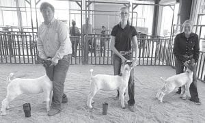 Senior Lamb Showmanship winners were Caleb McMullen, 1st place; Taylor Yound, 2nd place and Adde Stendebach, 3rd place. COURTESY PHOTO