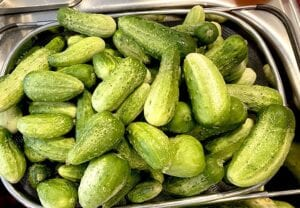 The Just Family grew Pickling Cucumbers and Crimson Spineless Okra at their home in Jourdanton. LONI JUST | PLEASANTON EXPRESS