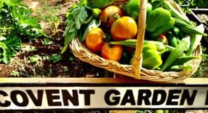 "An anonymous gardener in Jourdanton was inspired by staying at home. She has said, ""It's so rewarding. Instead of a COVID garden, it's a Covent garden, a nod to our London friends, who make the most of their small space. It has inspired some great dishes: frittatas, Caprese salad, homemade pesto, squash relish, chicken calabacita, margherita pizza."" COURTESY PHOTO"