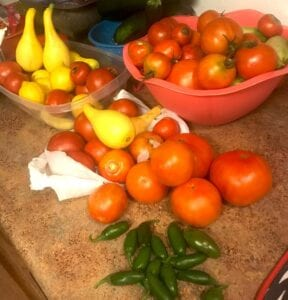 An array of vegetables that AJ and his grandfather, Ray Rodriguez, picked from the garden. COURTESY PHOTO