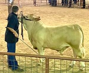 Case Conover, 4th place Heavy Brahman steer at the Race Day Classic COURTESY PHOTO
