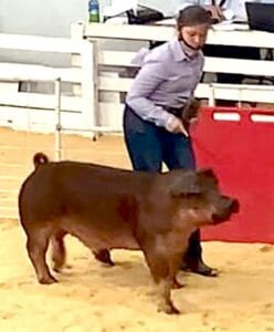 Macy Powell, 5th grader at Jourdanton Elementary, showing her Duroc at the Texas State Fair. COURTESY PHOTO
