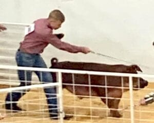 Reid Powell walking with his Duroc. COURTESY PHOTO