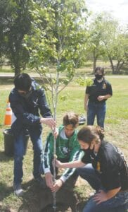 Pleasanton JROTC students assist with the planting of the redbud tree for Desiree Anger.