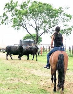 Kelsey Gonzales riding bareback on her mustang Sky, helping round up cows at her home in Poteet. LESLIE GONZALES | COURTESY PHOTO