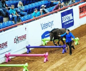 Gonzales, 13, with Sky jumping over cavalettis at the 2016 Extreme Mustang Makeover competition in Fort Worth after only 120 days of training, straight from the wild. LESLIE GONZALES | COURTESY PHOTO