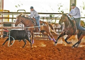 Logan (left) and Mason (right) Moore rope a steer during a practice run at Cowboy Fellowship Church. The duo teamed up for the first time in four years to qualify as team ropers for the CNFR in Casper, Wyo. SAM FOWLER | PLEASANTON EXPRESS